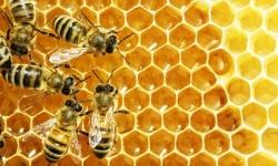 Полынный мед